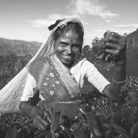 indian subcontinent ethnicity: Indigenious Sri Lankan Tea Picker Character Concept Stock Photo