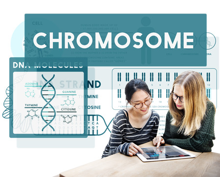 Chromosome concept with two women