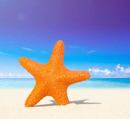echinoderm: Starfish on a Tropical Beach Concept