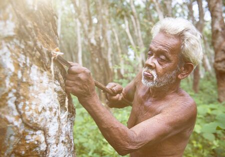 tapping: Man Tapping Rubber Tree Concept Stock Photo