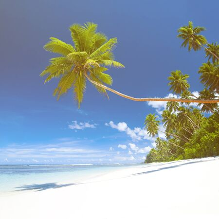 corall: Tropical beach destination.