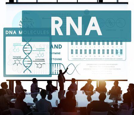 rna: RNA Ribonucleic Physical Molecule Evolution Concept Stock Photo