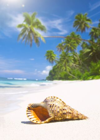 corall: Shell on tropical beach.