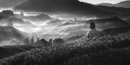 tradition: Tea Mountain Nature Plantation Tradition Culture Concept