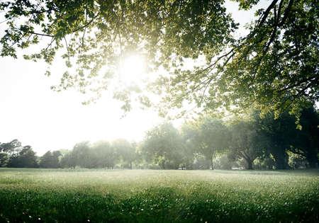 Green Field Park Environment Scenic Concept Reklamní fotografie