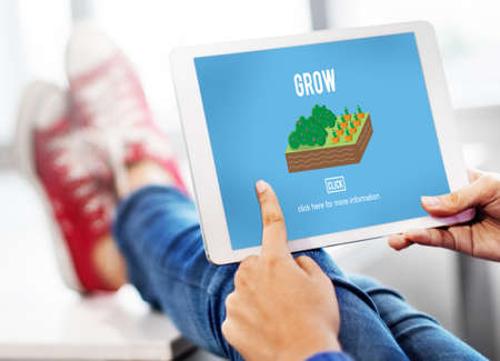 cultivated: Grow Crop Cultivated Agricultural Nature Season Concept Stock Photo