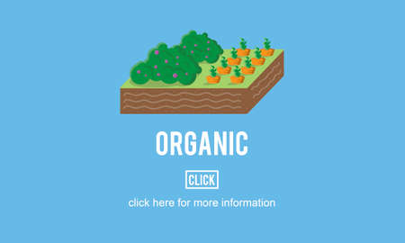 organic farming: Organic Agriculture Crop Environment Growing Concept