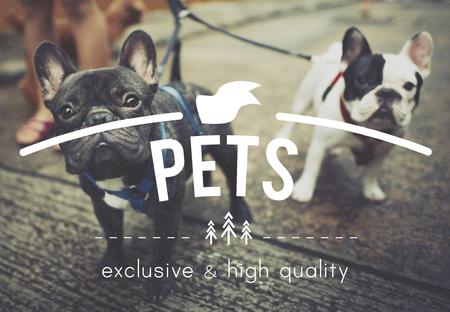 mans: Puppies Pets Mans Bestfriend Concept
