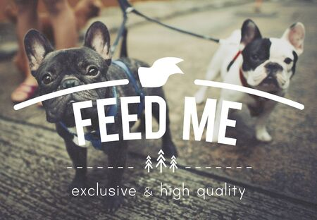 feed the poor: Feed Me Hungry hunger Food Eat Pet Starvation Concept Stock Photo
