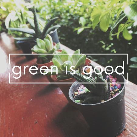 Summer Plant Ecology Botanical Concept Stock Photo