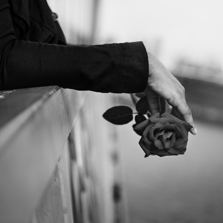 afecto: Rose Amor Cuidado Pasi�n Romance Como Concepto afecto Foto de archivo