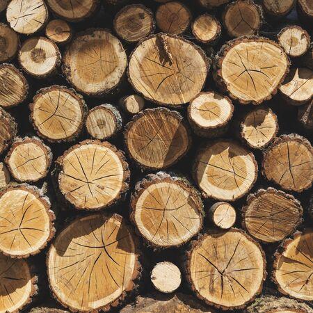 logging: Lumber TImber Trunk Firewood Woodpile Logging Concept