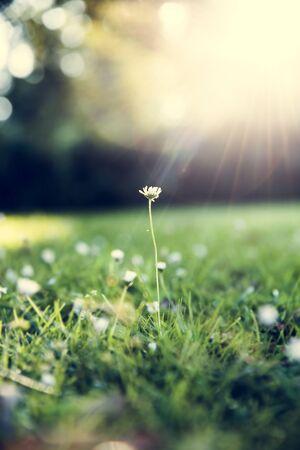 Blumen-Grün Gras Natur Frische-Konzept