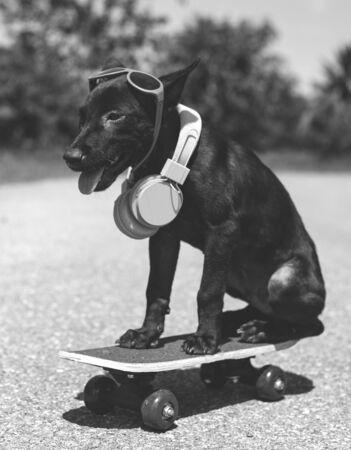 Dog Headphone Skateboard Summer Playful