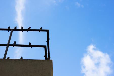 屋上手すり鳥青空します。 写真素材