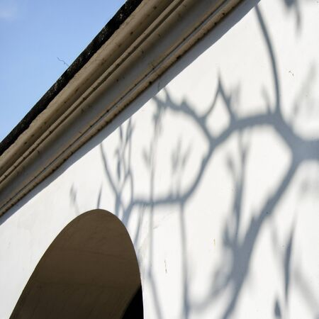 vegatation: Wall Roof Shadow Branches Nature Stock Photo