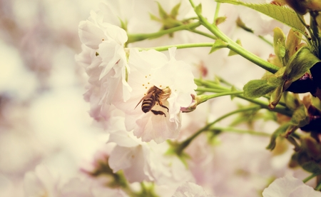 Beautiful Flower Bee Widlife Lifestyle Natural Imagens