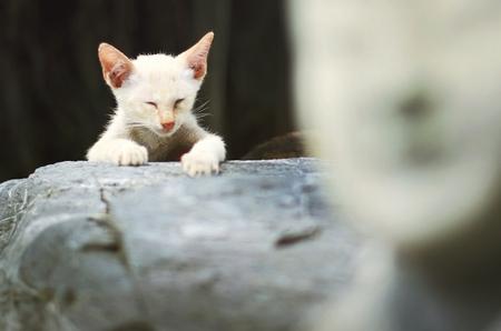 猫子猫かわいい動物概念