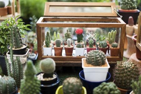 Cactus Display Nature Plants