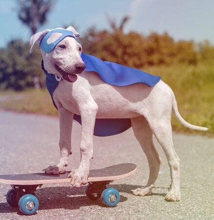 Hipster street dog on the skateboard Stock Photo