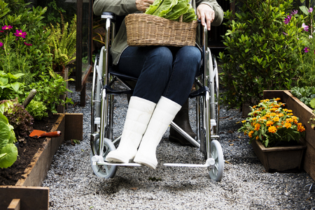 Senior Adult Woman Sitting on Wheelchair in a Park Stock Photo