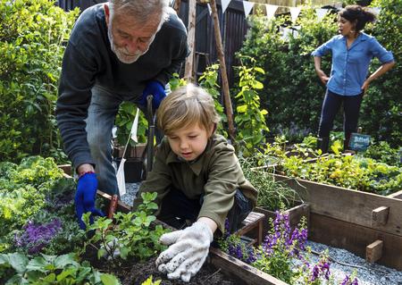 Family planting vegetable from backyard garden Banco de Imagens
