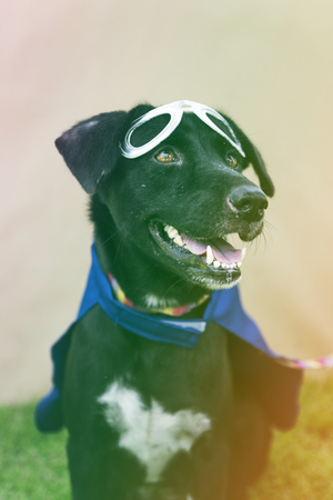 Black Dog Wear Superhero Costume with Mask Stock Photo