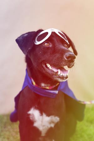 Black Dog Wear Superhero Costume with Mask Imagens
