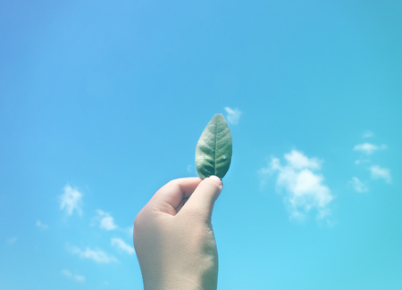 Hand Hold Show Leaf Up To Sky