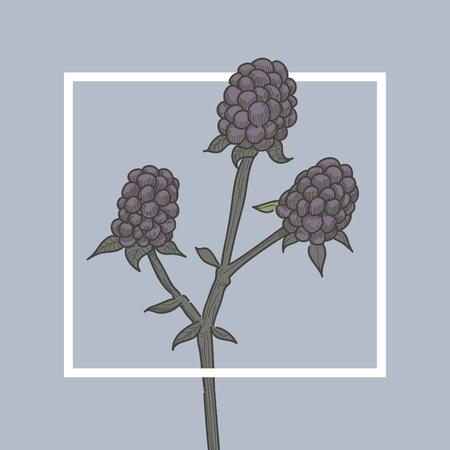 dewberry: Cloudberry Blackberry Fruit Illustration Concept Illustration