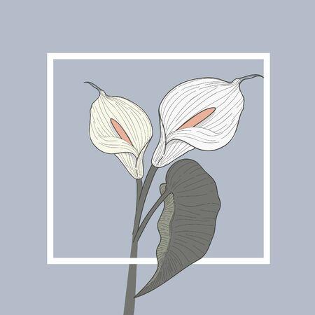 Anthurium Floral Vector Illustration Concept