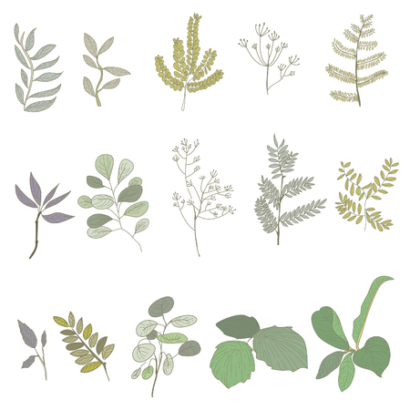 Herb Botanical Vector Drawing Concept