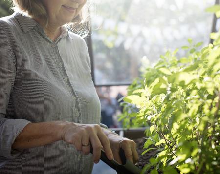 Gardening Nature Plant Flower Green Stock Photo
