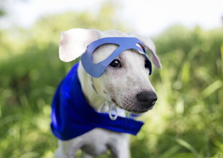 Dog Costume Breed Canine Friend Mammal Animal Imagens - 78681373