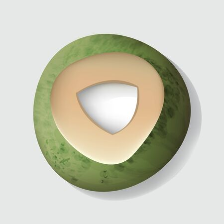 Fresh Cut Open Coconut Vector Illustration