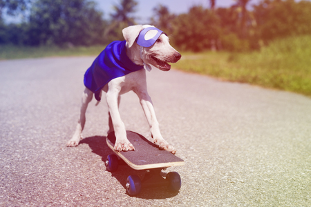 Dog Wear Superhero Costume on Skateboard