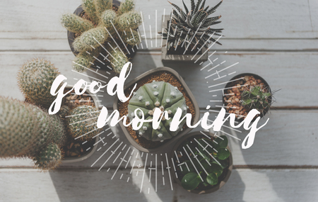 Cactus with good morning greeting 版權商用圖片