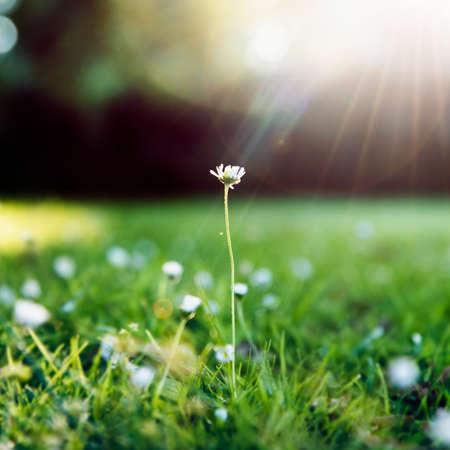 Flower Green Grass Nature Freshness Concept