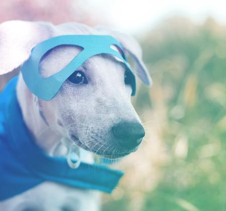 Hipster street dog on the superhero costume