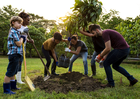 Groep mensen planten een boom buiten in openlucht