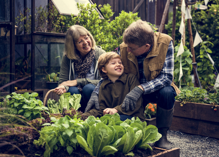 Family picking vegetable from backyard garden