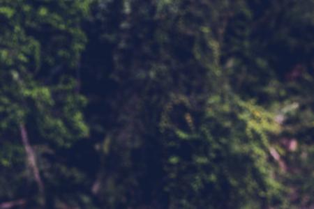 녹색 숲 정글 우드 자연