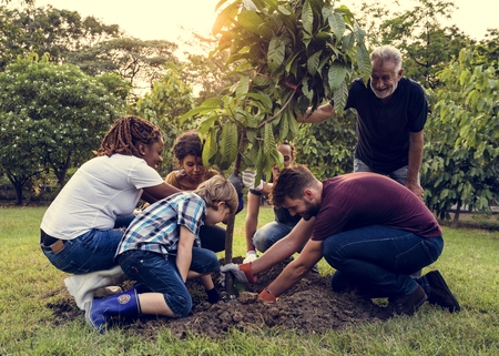 Group of people plant a tree together outdoors Foto de archivo