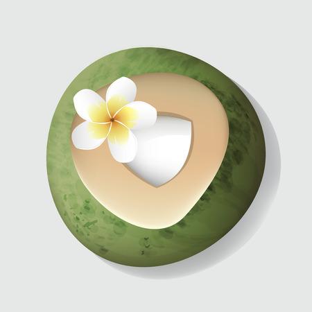 Vers gesneden open kokosnoot met bloem vectorillustratie