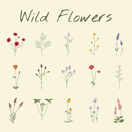 Set Collection of Wild Flowers Vector Illustration 向量圖像