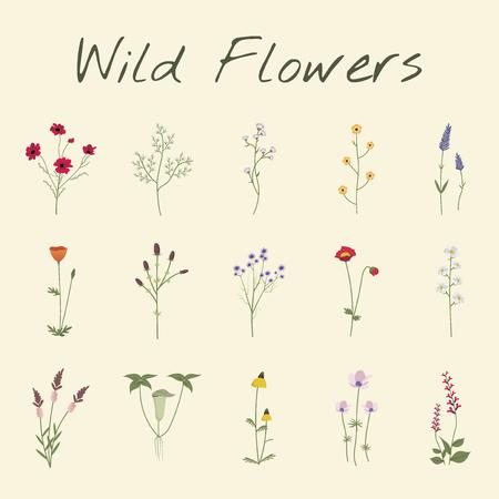 Set Collection of Wild Flowers Vector Illustration Ilustração