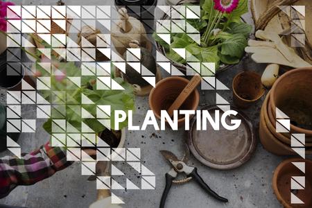 식물 배경에 심기 단어