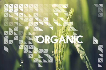 heathy: Alternative Farming Sustainable Nature Concept
