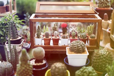 집 장식을위한 많은 houseplants 컬렉션 스톡 콘텐츠