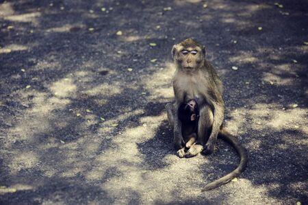 Monkey Sitting Alone on Street Side